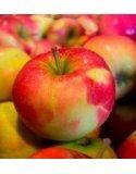 Línea de elaboración de manzanas